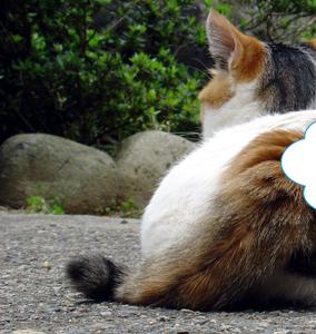 飯店 三 毛 猫